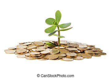Money Tree (crassula) growing from a pile of coins.