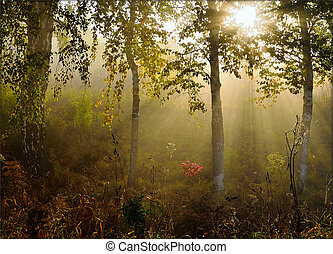 morning fog in the forest with beautiful sun rays