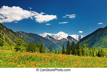 Mountain landscape with blossoming field and blue sky