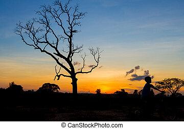 mountainbike silhouette in sunset