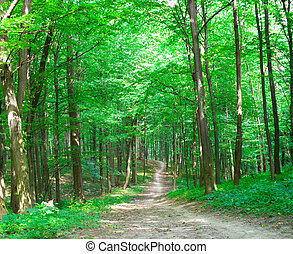 nature of summer. path in green forest