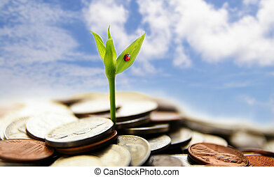 new growth from coins - financial concept