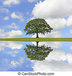 Abstract of an oak tree in full leaf in summer standing alone on an area of grass, with reflection in rippled water. Set against a blue sky with cumulus clouds.