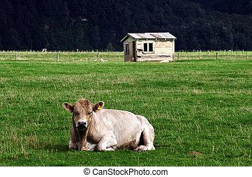 Old Farm House Bull New Zealand