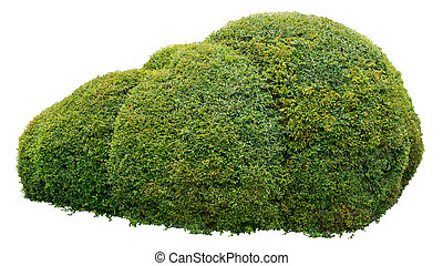 Ornamental bush