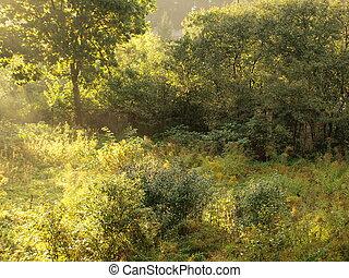 Wilderness landscape in autumn evening sunlight stand alone tree
