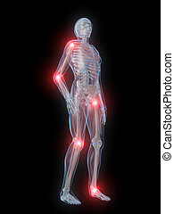 3d rendered illustration of a human skeleton with highlighted joints