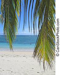 Palm leafs and blue sea from Nattes island, Nosy Boraha, Sainte, Marie island, Madagascar