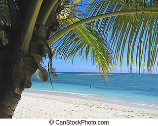 Palm tree and blue sea from Nattes island, Nosy Boraha, Sainte, Marie island, Madagascar
