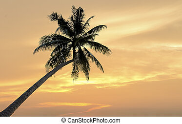 Palm trees on the sunset background