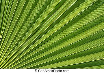A Close-up of a Washington Palm Reveals an Abstract Design.