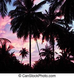 Palms and sky