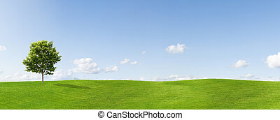 Panorama of a meadow with a maple tree