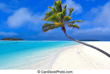 Bending Palm in the Cook Islands