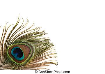 Peacock Feather Border