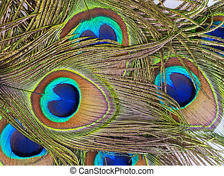 Detailed photo of a bunch of beautiful vivid peacock feathers