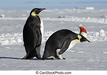 Penguin couple on Xmas