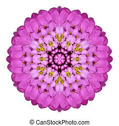 Pink Kaleidoscopic Flower Mandala Isolated on White