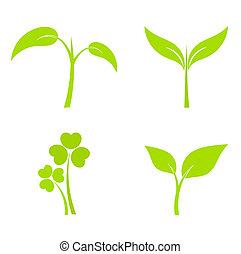 Set of four plant or leaf icons. Vector illustration