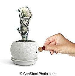 profit concept, money growing in pot