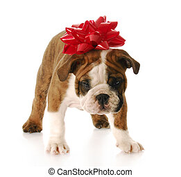 puppy for present