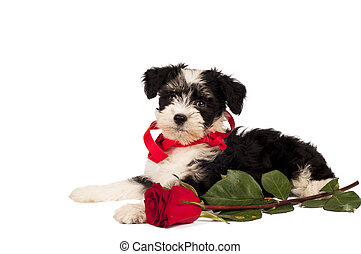 Puppy for present.