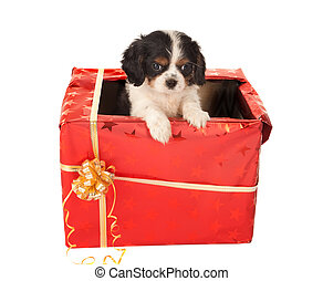 Puppy surprise for christmas