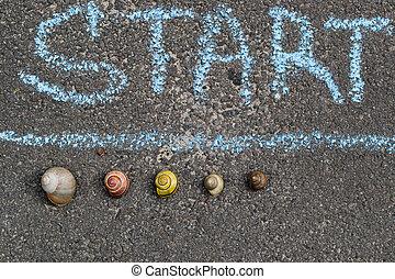 Racing snails closeup