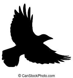 Raven 008