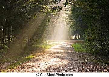 Rays of sunlight on the path in the forest