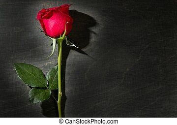 Red rose macro over dark black wood
