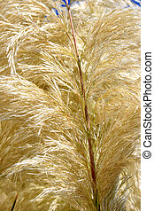 Reed feather