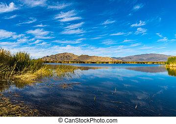 Reeds and lake