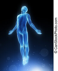 3d rendered illustration of a transparency male body