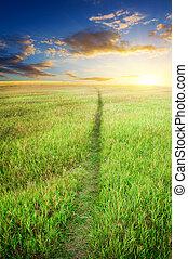 Road on green meadow