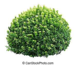 Round ornamental bush