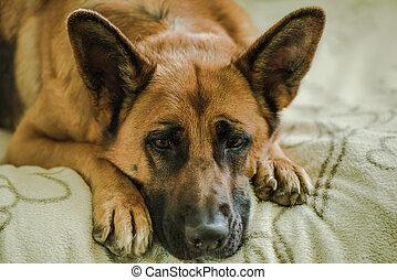 sad dog missing his owner
