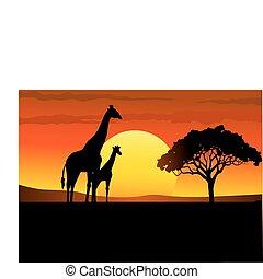 Safari Africa sunset