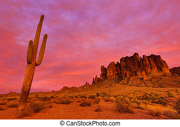 saguaro against the red sunset sky