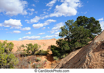 Sand Flats Recreation Area