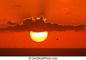 Seagull on sunset background