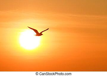 Seagull on sunset background, thailand