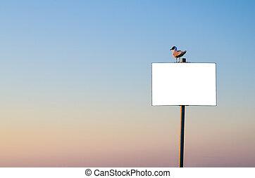 Seagull sitting on banner on sunset sky background