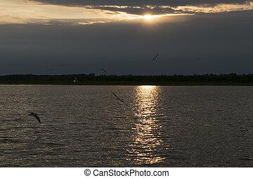 Seagulls on sunset background