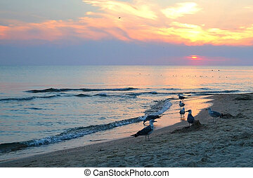 seagulls on the seashore. sunset.
