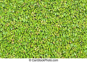 Seamless Leaves Texture
