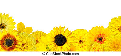 Selection of Yellow Flowers at Bottom Row Isolated on White. Various set of Dahlia, Dandelion, Daisy, Gerber, Sunflower, Marigold Flowers