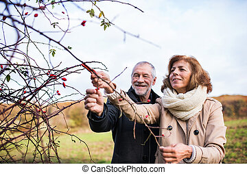 Senior couple standing by rosehip bush in an autumn nature.