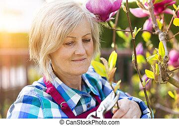 Senior woman pruning magnolia tree