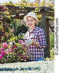 Senior woman trimming a rose-bush in garden